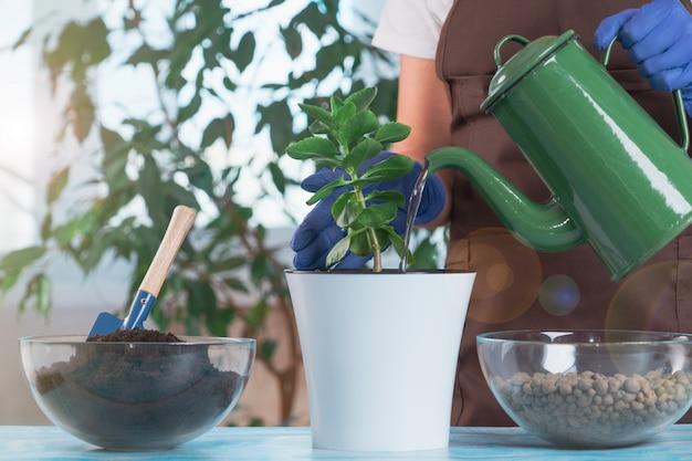 Een jonge vrouw transplanteert planten in een andere pot thuis. tuingereedschap voor thuis.