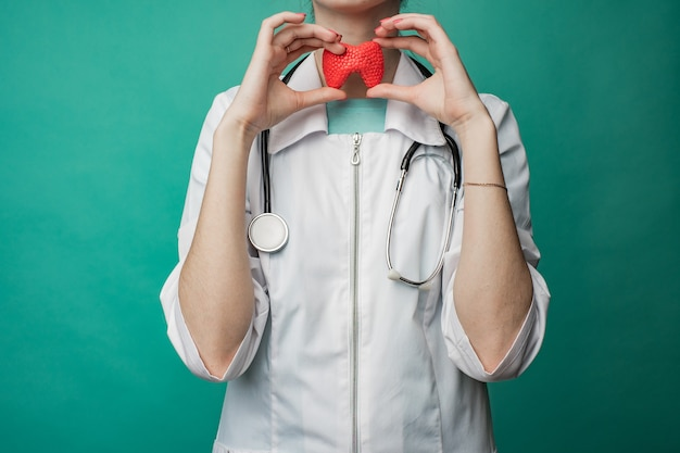 Een jonge vrouwelijke arts houdt een model van de schildklier van een persoon in haar handen. het concept van bescherming en behandeling