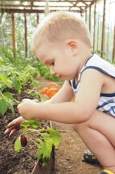Een jongetje in een kas groef radijsjes op en onderzoekt het.