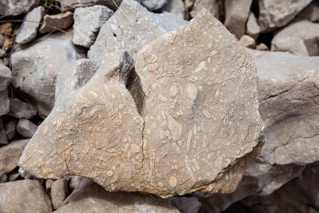 Een kalkstenen rots met fossielen van schelpen van het kroatische eiland krk