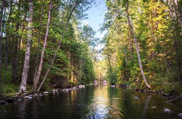 Een kanaal met water tussen het noordelijke bos