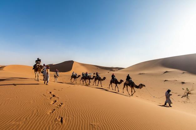 Een karavaan van kamelen met een gids vaart door de woestijn naar marokko