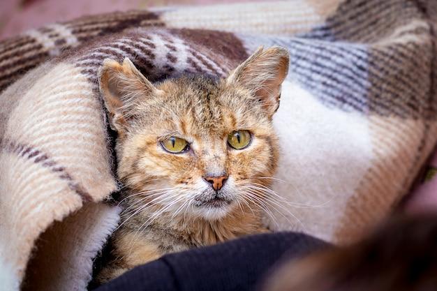Een kat bedekt met een deken in bed kijkt uit