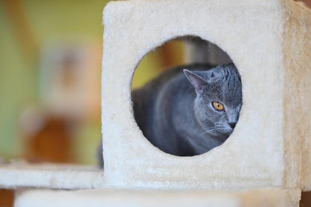 Een kat die camera in kattenstuk speelgoed huis bekijkt.