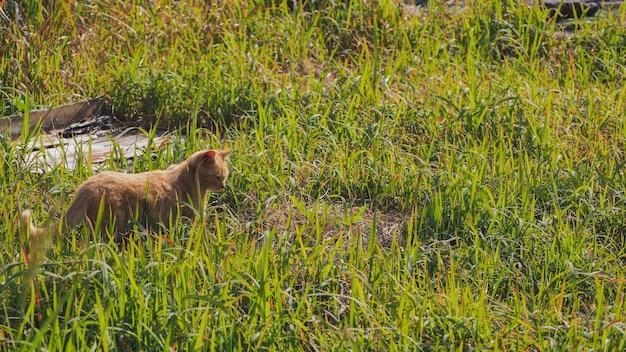 Een kat die zich op het grasgebied bevindt