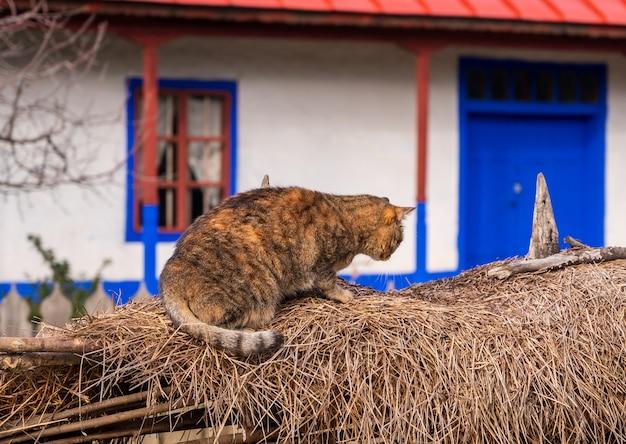 Een kat in de buurt van een huis in het dorp
