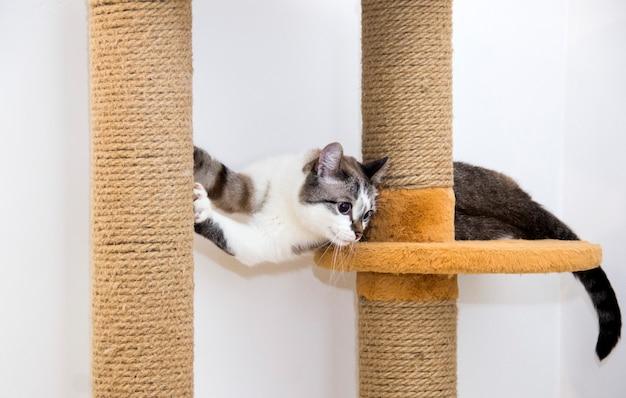 Een kat in een kattenhuis. de kat rust in zijn huis.