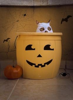 Een kat in een spookkostuum verstopt zich in een emmer op het halloweenfeest