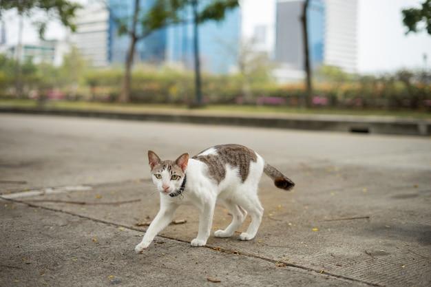 Een kat loopt in de tuin. hij is zo schattig. hij lijkt op een kleine tijger. het is een populair huisdier.