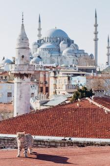 Een kat loopt op de daken van istanbul