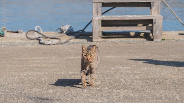 Een kat loopt op straat in de buurt van de haven