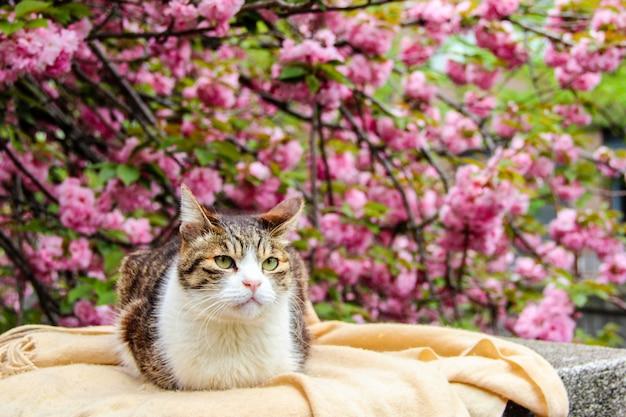 Een kat met de sakura of cherry bossom achtergrond in park tokio van japan
