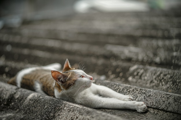 Een kat slaapt op het dak van het huis