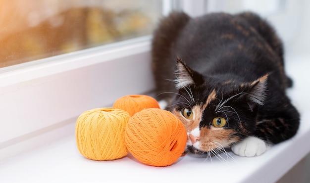 Een kat speelt met een bol garen pet spelletjes garens voor breien advertentiespeelgoed voor katten adverteren voor breigaren schattige foto van een kat foto's voor gedrukte producten