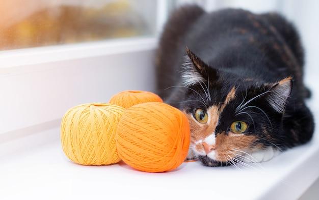 Een kat speelt met een bolletje draad. pet spellen. draden voor breien.