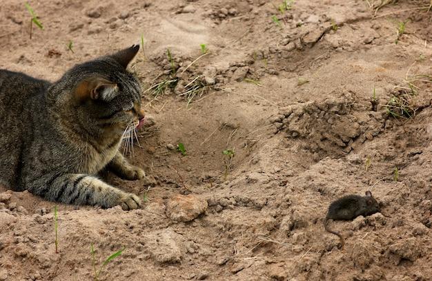 Een kat speelt met een gevangen muis