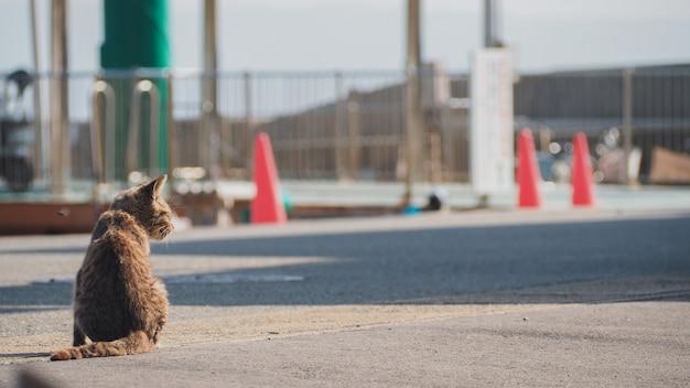 Een kat zit op straat in de buurt van de haven