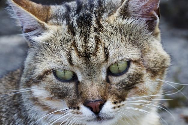 Een kattenportret. kat gezicht close-up in de straat