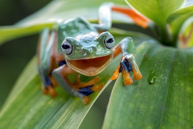 Een kikker met een lachend gezicht op een blad