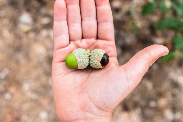 Een kind houdt een paar eikels in zijn hand