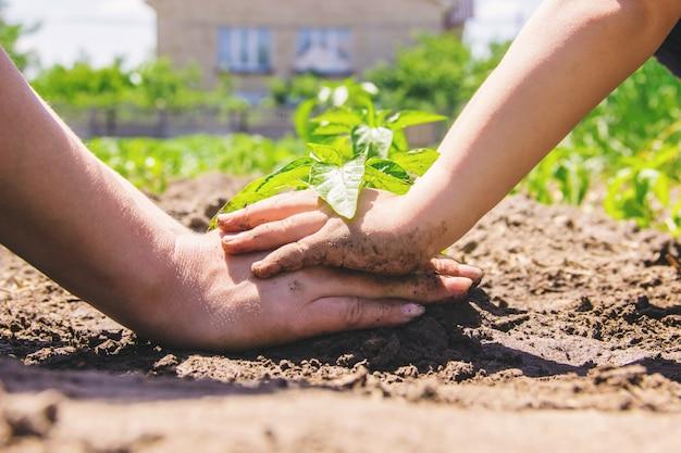 Een kind plant een plant in de tuin. selectieve aandacht.