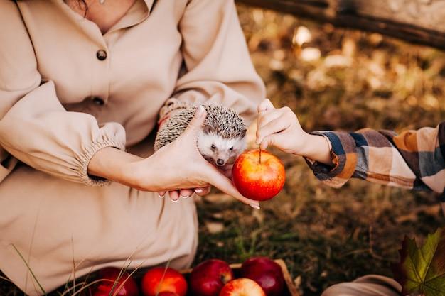 Een kinderhand strekt een appel uit om een egel in de handen van een vrouw te voeden.