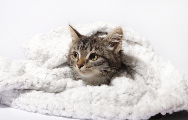 Een kitten en een deken op een witte achtergrond