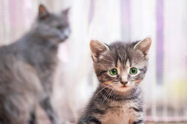Een klein gestreept katje met groene ogen zit bij haar moeder en kijkt ernaar uit