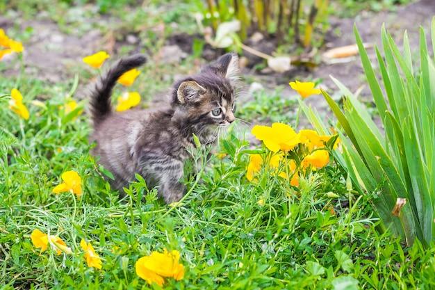 Een klein gestreept katje onder gele bloemen op een bloementuin
