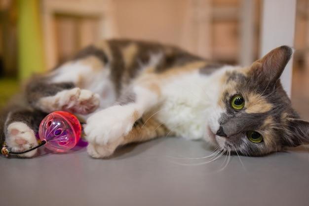Een klein gestreept katje speelt met plastic ballen. interessante dieren.