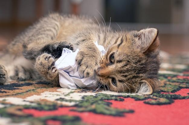 Een klein gestreept katje speelt met verfrommeld papier