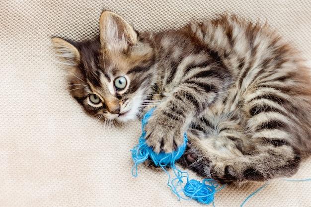 Een klein gestreept kitten wordt gespeeld met blauwe draden