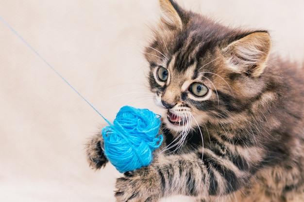 Een klein gestreept kitten wordt gespeeld met een bosje blauwe draden