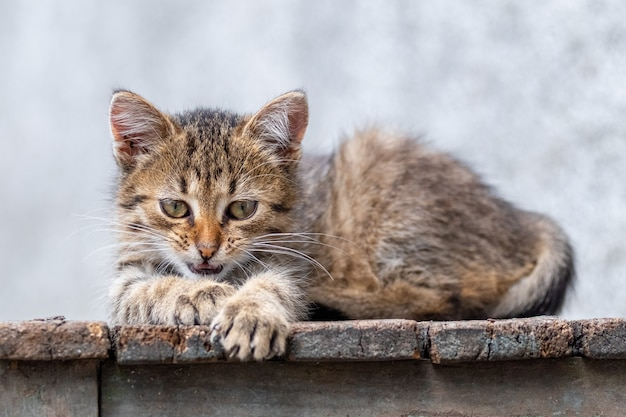 Een klein gestreept schattig katje ligt op een houten stoel