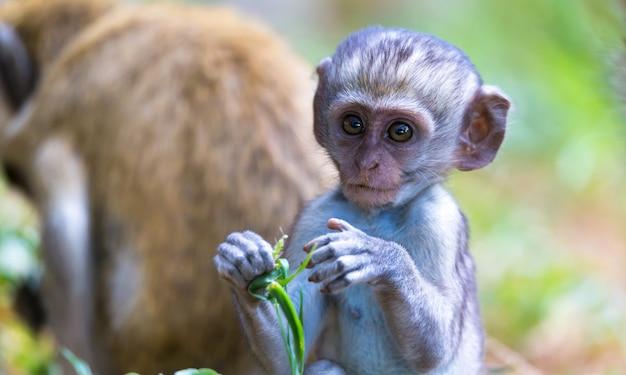 Een klein grappig aapje speelt op de grond of in de boom