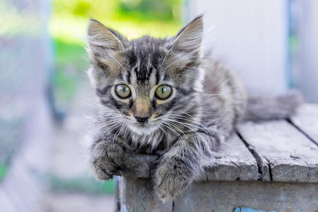 Een klein grijs gestreept katje ligt op een stoel en kijkt voorzichtig vooruit