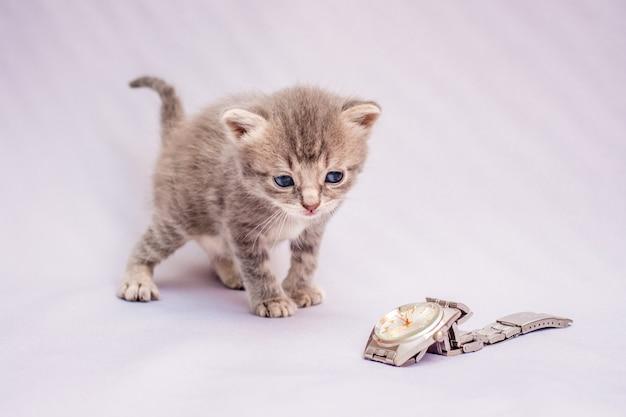 Een klein grijs katje kijkt aandachtig naar het horloge. een kitten op een lichte achtergrond