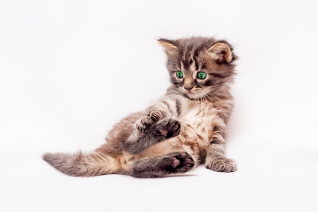 Een klein grijs katje met groene ogen ligt in een grappige pose