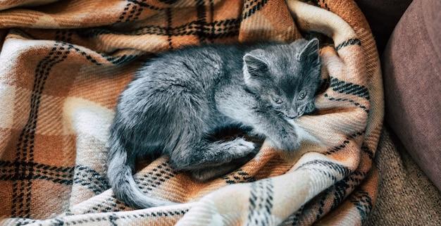 Een klein grijs katje slaapt op een wollen deken. ontsteking van het derde ooglid bij katten.