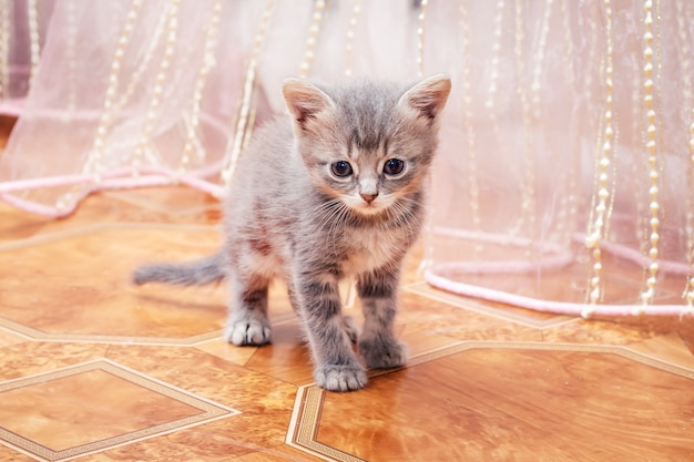 Een klein grijs katje slentert door de kamer