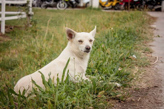 Een klein hondje dat in het gras van een stapel speelt.
