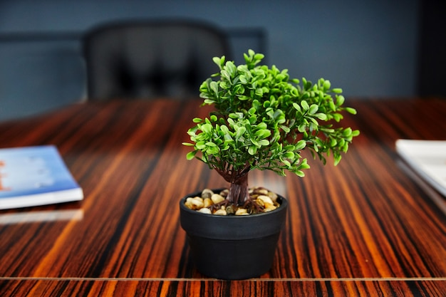 Een klein huishouten buxus staat in een pot op tafel