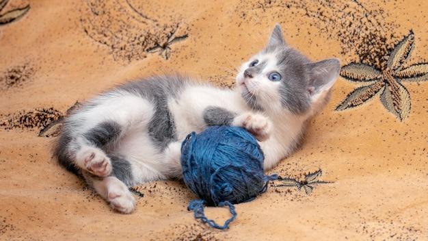 Een klein katje ligt op de bank en speelt met een streng draad