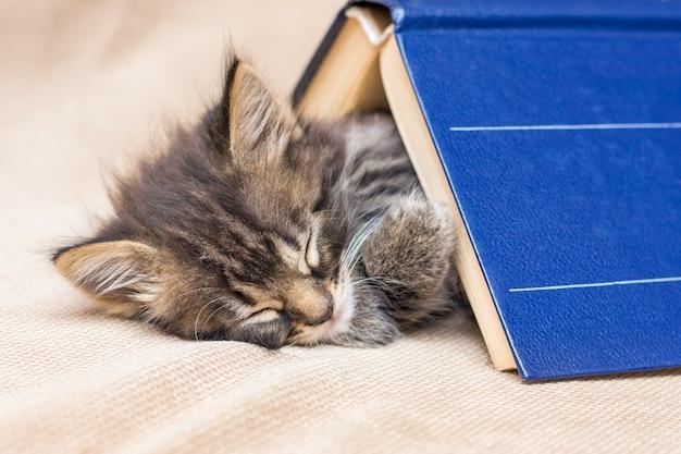 Een klein katje slaapt zoet onder een dik boek. rust na school
