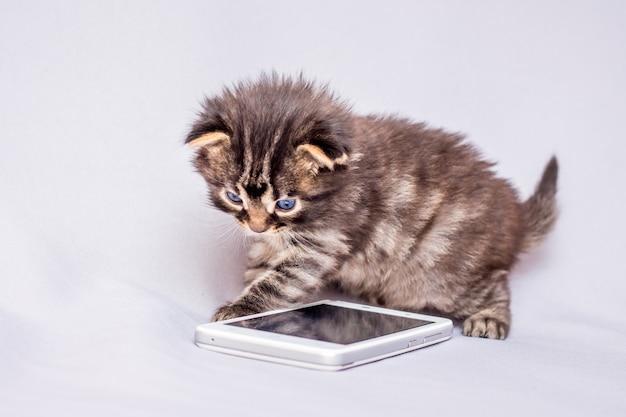 Een klein katje wordt gespeeld door een mobiele telefoon. mobiele communicatie. kies het telefoonnummer