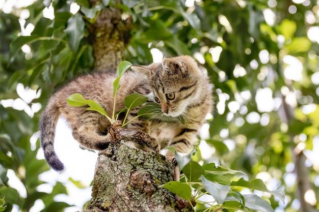 Een klein katje zit op een boom en kijkt schuchter naar beneden