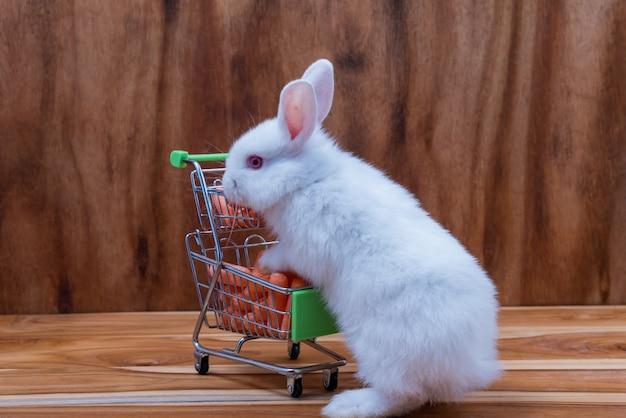 Een klein konijn met wit bont, lange oren op een houten vloer.