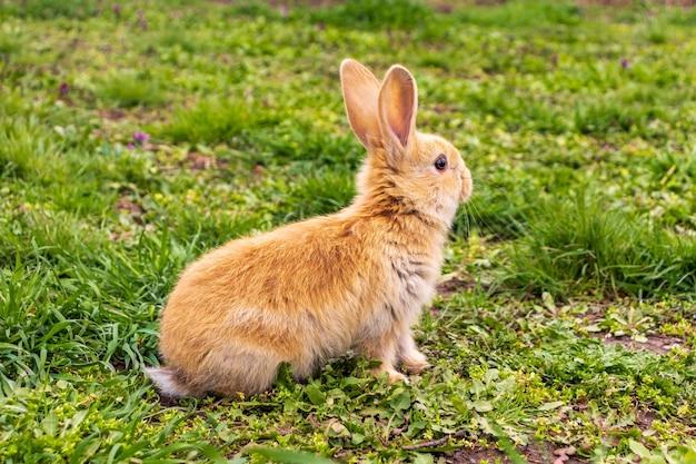 Een klein konijn met zit in het groene gras
