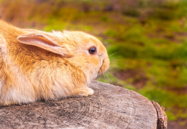 Een klein konijn zit in het groene gras