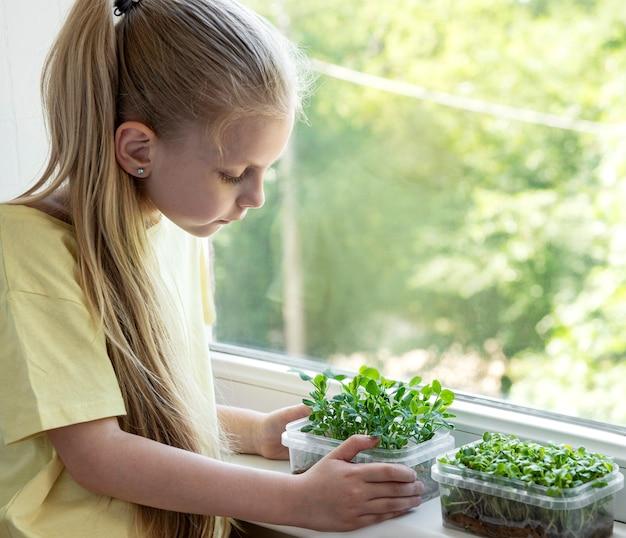 Een klein meisje bij het raam kijkt hoe microgroen groeit
